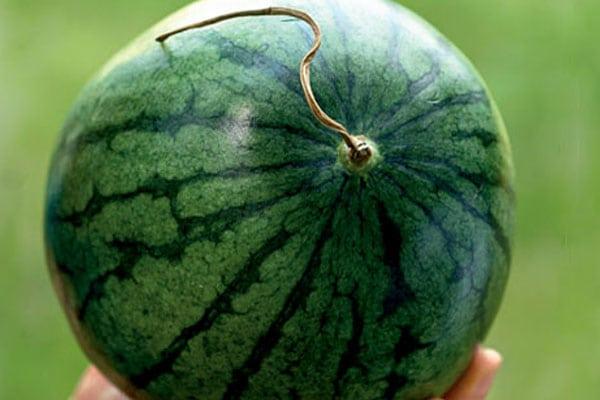 Как выбрать арбуз и 3 способа нарезать арбуз