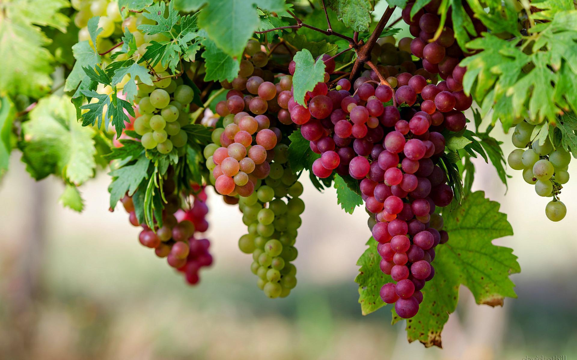 9 причин съесть виноград