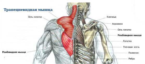 Базовые упражнения Тома Харди для прокачки трапеции и дельт