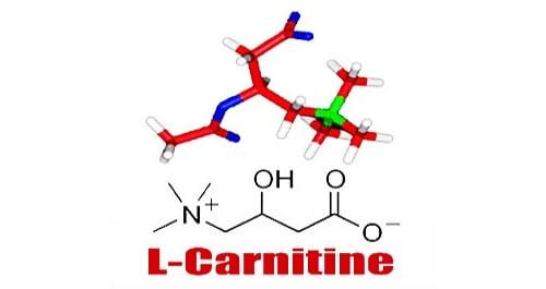 Как принимать Л-карнитин для сжигания жира во время тренировок