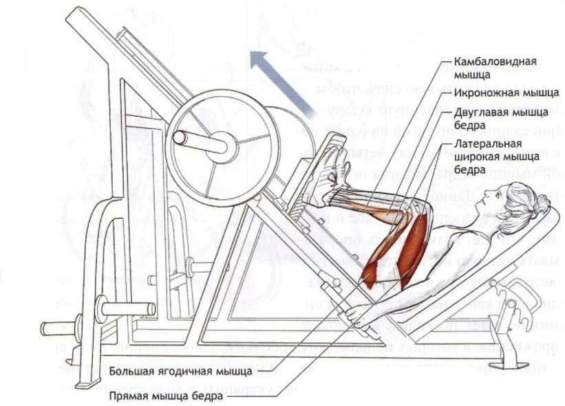 Упражнение «жим ногами в тренажере»: техника и вариации