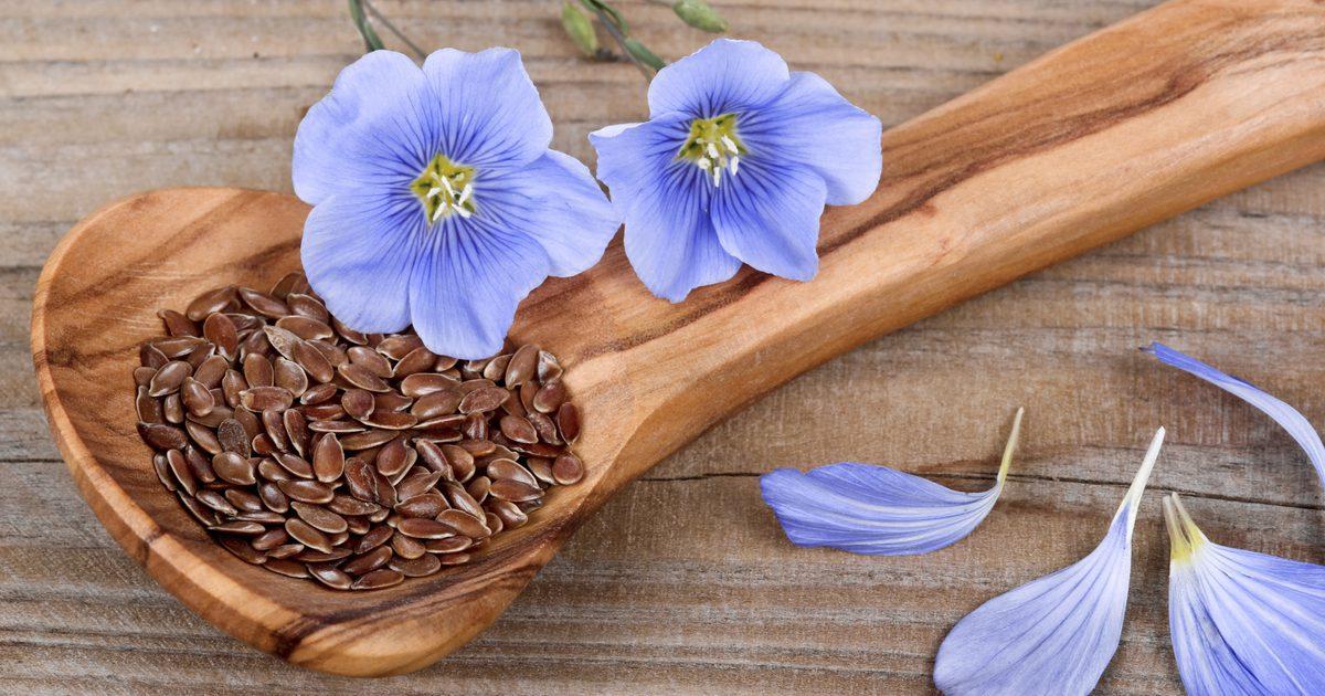 Семена льна для очистки организма: Топ-3 способа, как принимать правильно