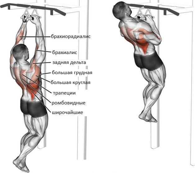 Какие мышцы работают при подтягиваниях на турнике разным хватом?