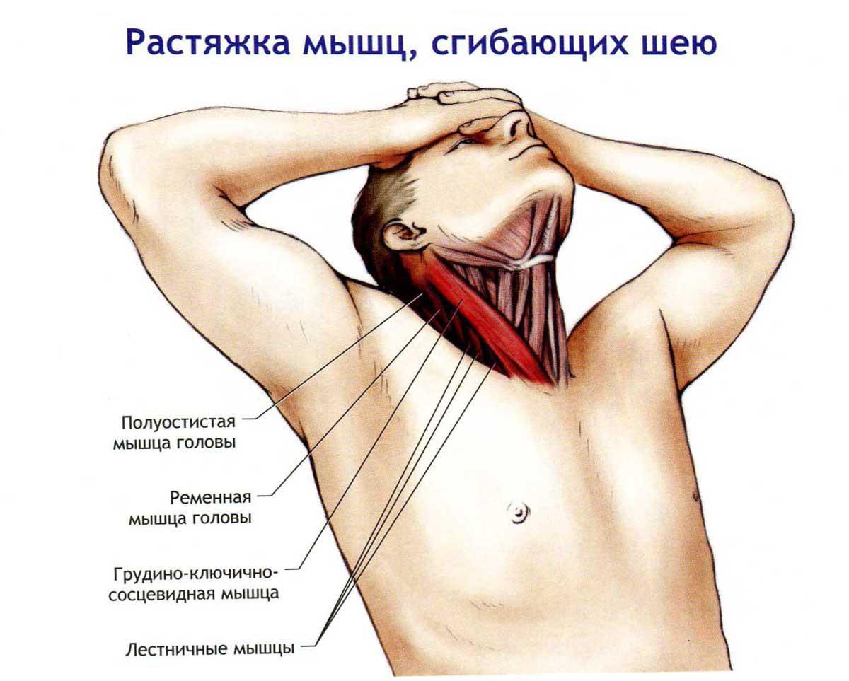 Как правильно качать шею? Топ-4 упражнения для мужчин